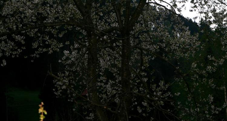 Frühlingsnacht Beltane