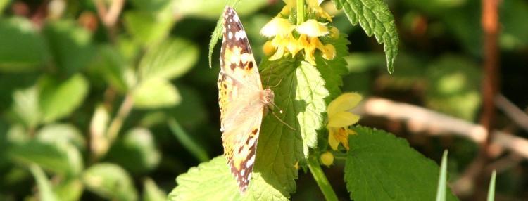 Der Geist des Schmetterlings