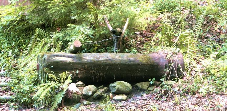Mystischer Brunnen im Wald